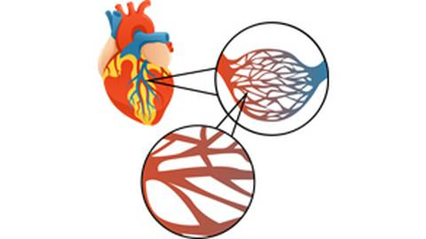 Advancing Cell Therapies for Coronary Microvascular Dysfunction: Experts Roundtable