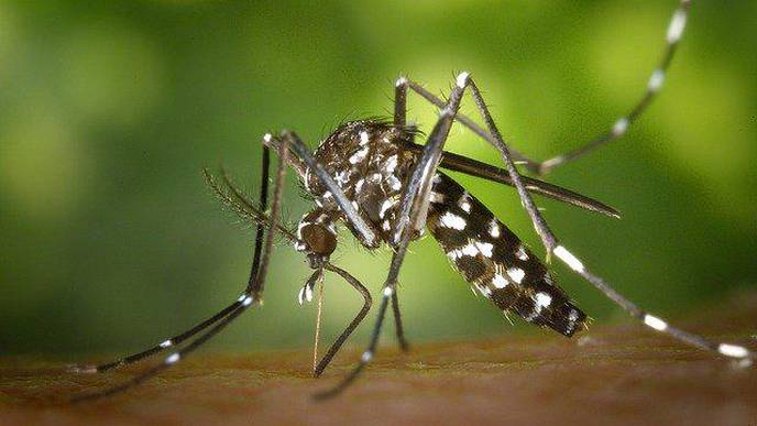 Mosquito-Borne Viruses Linked to Stroke