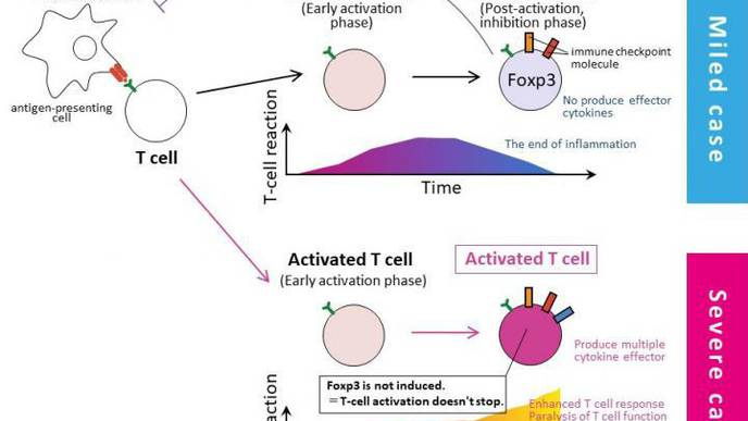 T-Cell Abnormalities in Severe COVID-19 Cases