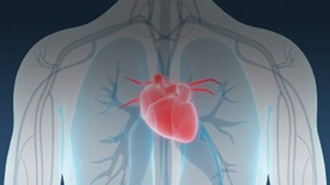 20th Annual National Sarasota Congress on Cardiovascular Disease Prevention: Update 2020