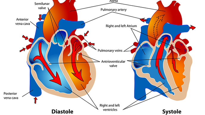 Intense Exercise Can Trigger Heart Trouble In the Unprepared